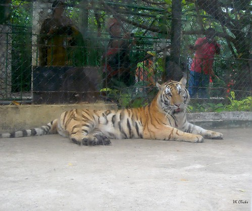 Ek Tha Tiger :) | by VK Clicks - OFF for a While