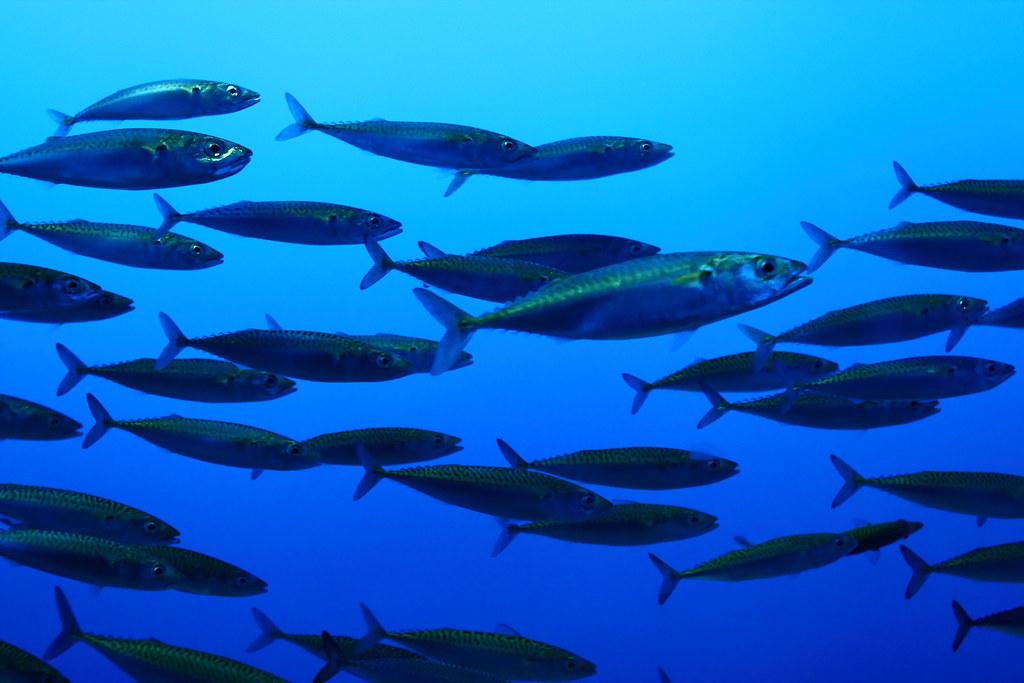 Fish school taken at the monterey bay aquarium the for The fishing school