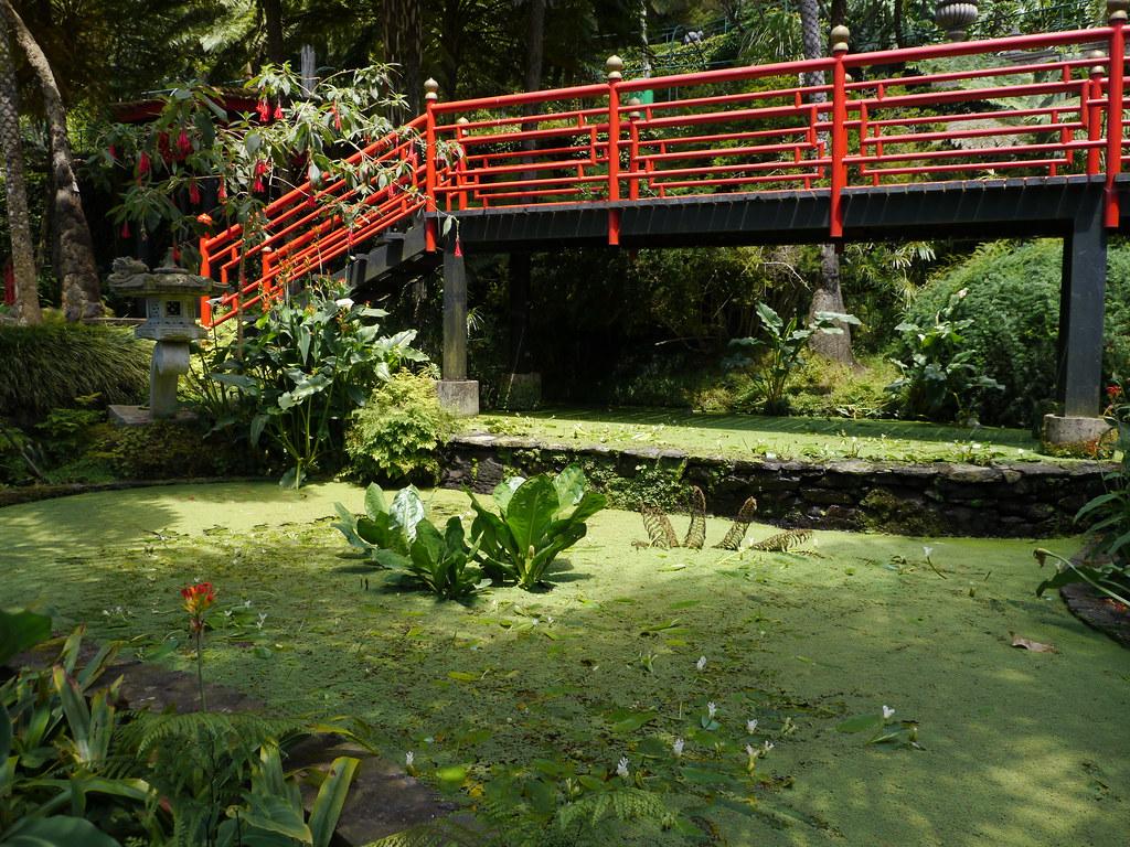Funchal jardin tropical de monte palace jardin for Jardin oriental
