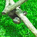 The Sloth Sanctuary