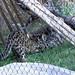 2012-06 - Denver Zoo