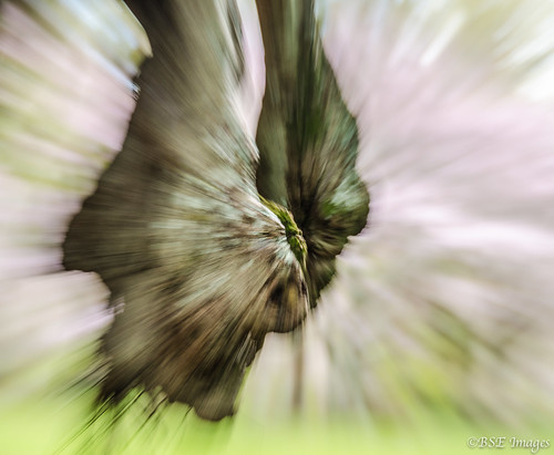 Abstract zooming | by Barance