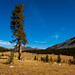 USA - California - Yosemite National Park