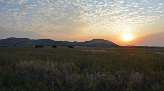 Morning on America's Serengeti | by Mike Doty