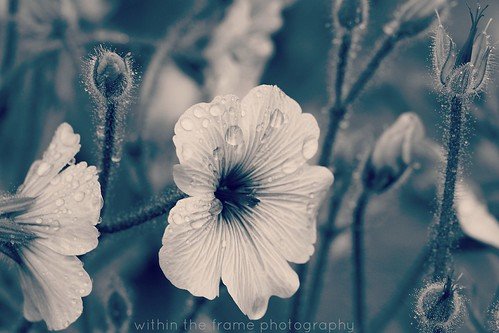 greyish blue macro tones | by WITHIN the FRAME Photography(5 Million views tha