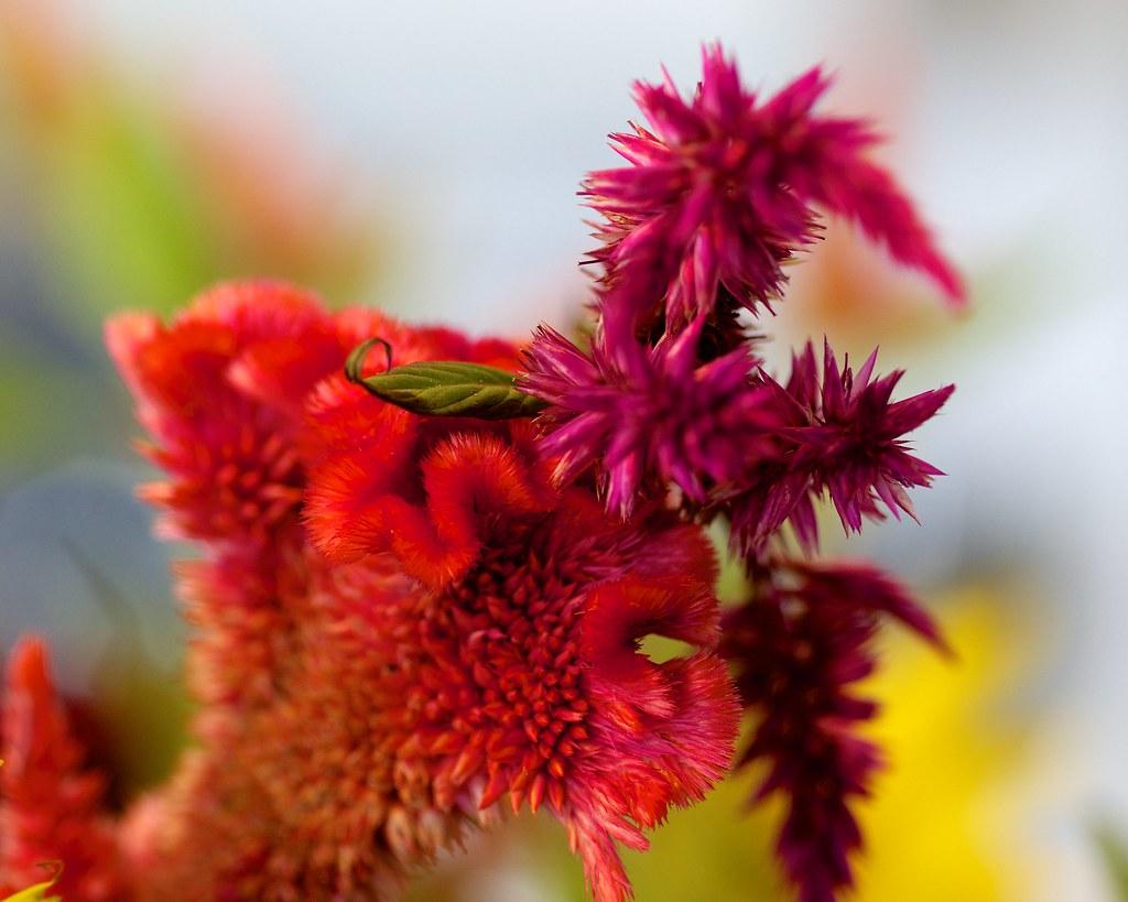 Weird Looking Flowers John Cecilian Flickr