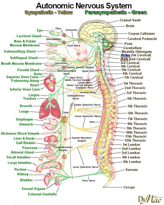 Autonomic-nervous-system-wallpaper | Claire Martin | Flickr