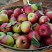 2012-09-08 - Apples - 0010
