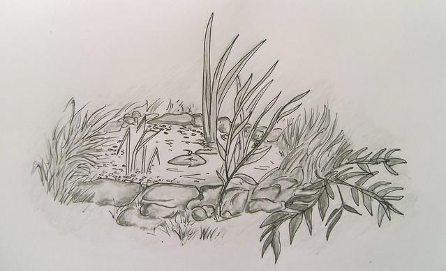 Garden Pond Sketch Flickr Photo Sharing
