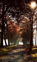 Forest Walkway by Joana Schenk