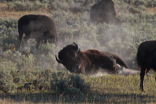 Bison Bath And Kitchen Reviews