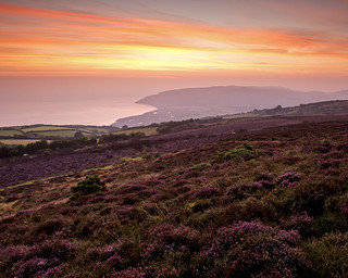 Dawn on Porlock Hill with the new d800 | by Sean D H Lewis