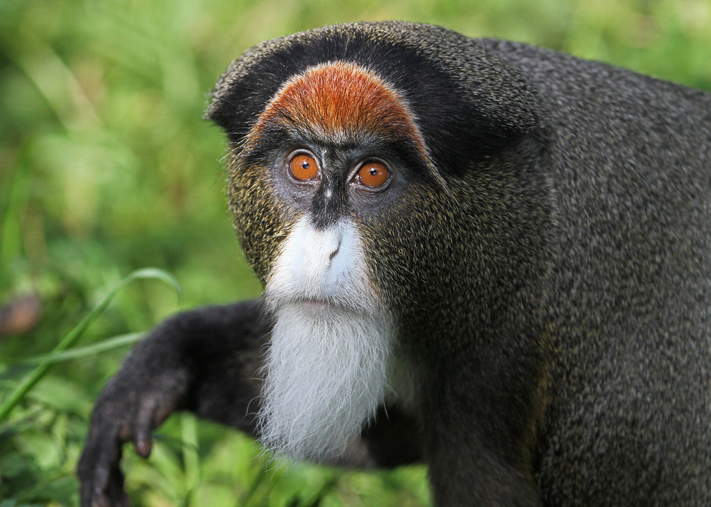 Bearded Monkey Name: These Have Got To Be My Favourite
