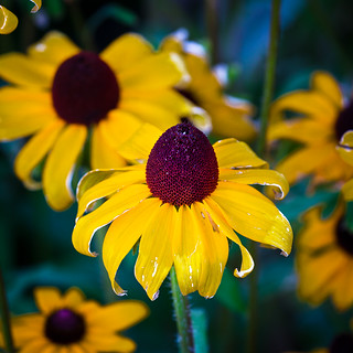 Late summer flowers | by Desert Sun Images