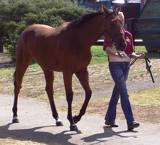 Equine Sales Auctioneer: These are needed at Thoroughbred Sales Worldwide