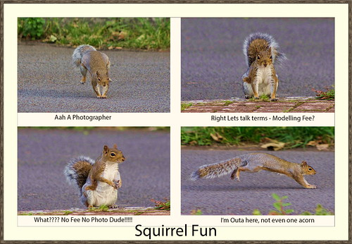 Squirrel Fun | by Through the eyes of a Valley's Boy