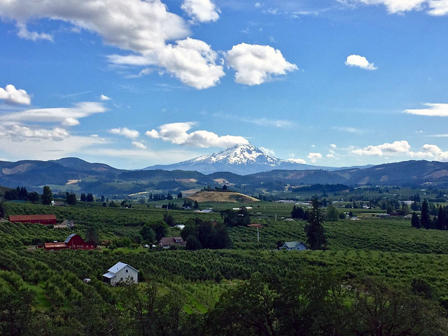 Mount Hood and nearby orchards from the Old Dalles Road
