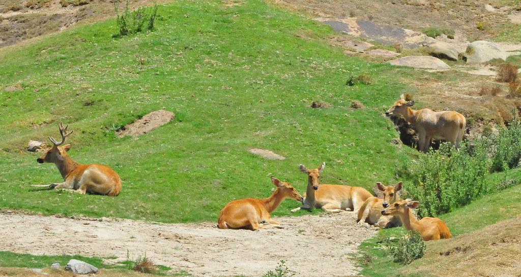 San Diego Safari Park Cart Tour
