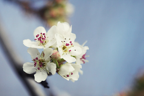 blossoms | by 74 Lime Lane