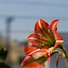 Flore (LB)