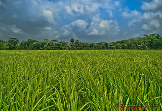 Green Field.. | by Shajal1 (updating my contact )