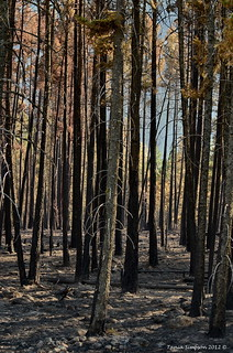 Wildfire Damage | by Photography Through Tania's Eyes
