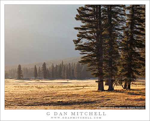 Trees and Meadow, Morning | by G Dan Mitchell