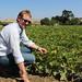zucchini-capay-organic-farm
