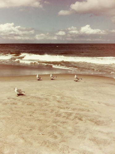 Seagulls on the Seashore | by Lynnylu