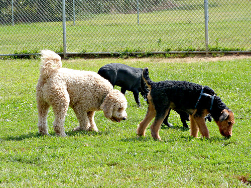 Three Sniffing Dogs | by Bri Leigh McD