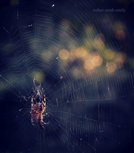 Spider's Everywhere | by esther sarah emily