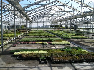 Blooming Nursery | by Oregon Department of Agriculture