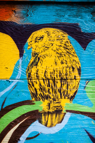 Don't Trust Owls | by Thomas Hawk