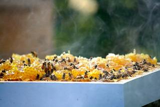 9/16/12 Harvesting Honey | by rayfamilyfarm