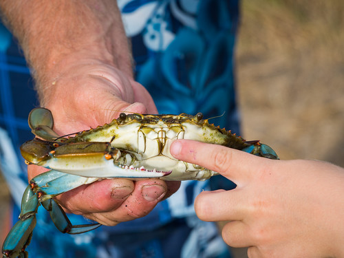 Father and Son, Crabbing for Fun | by Entropic Remnants