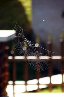 the web | by .GABRIELLE.