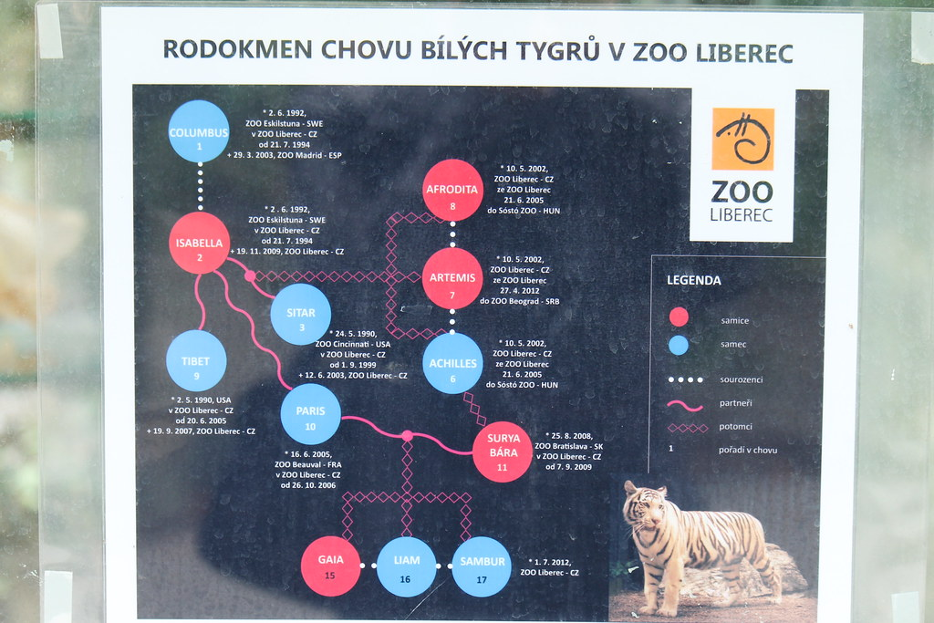 Der Tiger  die größte Raubkatze der Erde  WWF Deutschland