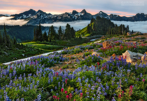 Eternal Beauty | by Aaron Reed Photography