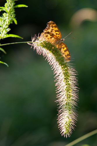 butterfly and grass | by julesberry2001