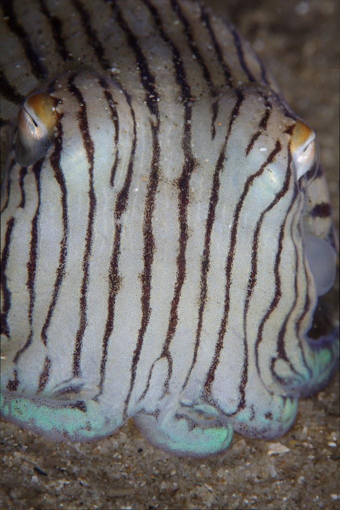 142da50f80 Pajama Squid
