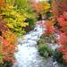 Autumn at Harris Creek