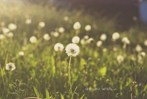 As you wish... | by Libertad Leal