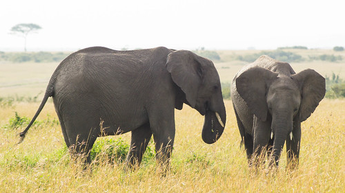Two Elephants | by Greg McMullin