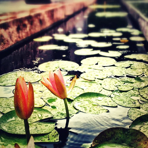 Lily Padness | by ChristineAnderson5428