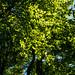 Image ID# Whalen-120911-1934   Hedgehog Brook Trail Six