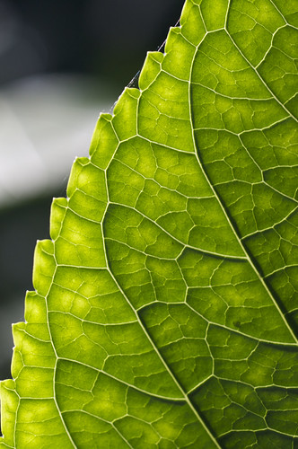 Veins | by Nick Harris1