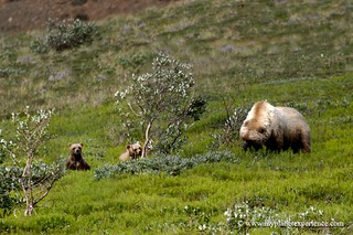 Hey mom, a guy is watching us! Alaska | by My Planet Experience