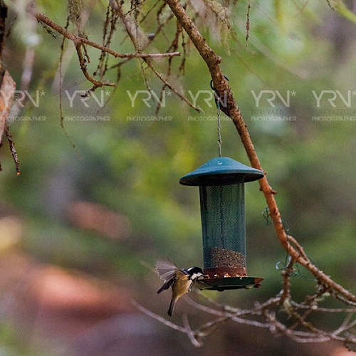 #birdwatching | by YRV* Photographer