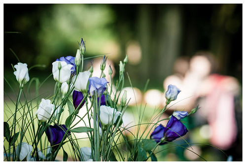 green, white, purple | by *pictress