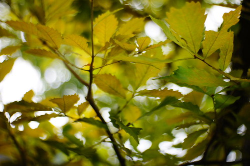 Leaves | by tokyogreen2010